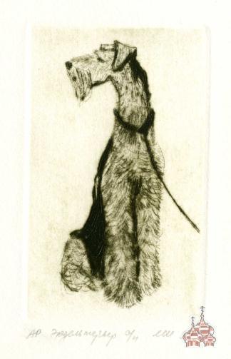 makoveeva Airedale Terrier