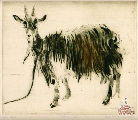 makoveeva Goat