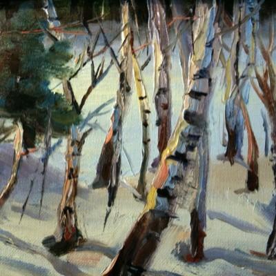 Birch Trees 11 x14
